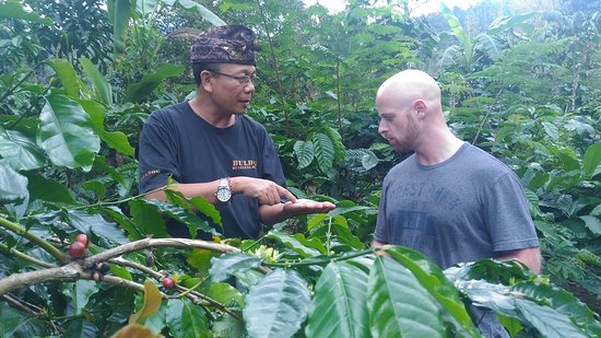 Munduk, Indonesia: On a brief coffee tour with Steffen, our kind German coffee lover...thanks