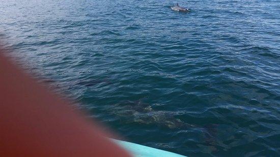 Drake Bay, Costa Rica: 20160823_074506_large.jpg