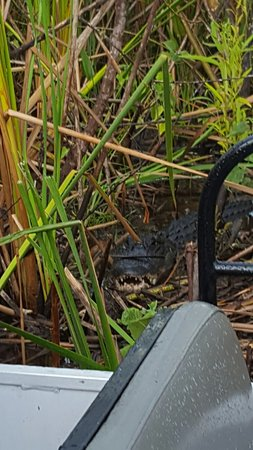 Kissimmee, FL: 20160823_163527_large.jpg