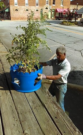 McCormick, Güney Carolina: Our Science Center is testing container gardening. This will feed a family of 4 fresh food for a