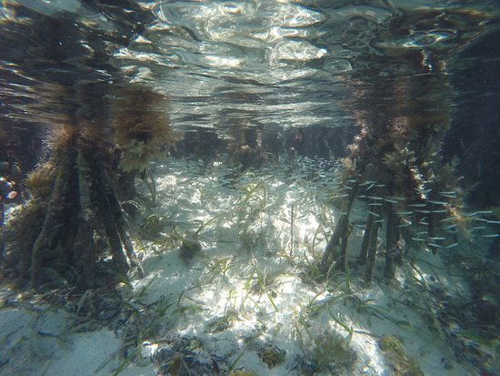 Coral Bay, St. John: Snorkeling