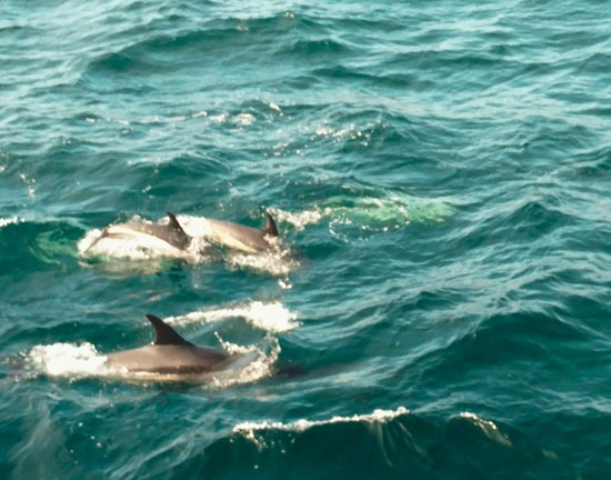 Barnstable, Массачусетс: White finned dolphins