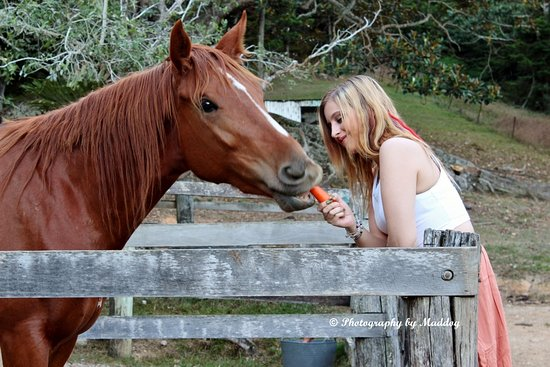 Tallebudgera, ออสเตรเลีย: The Horses love their carrots.  This is Rhynie, bred on the property, rising 3 years old.