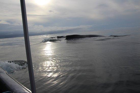 Punta Brava: Avistamiento