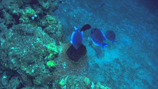 Dive Center at Sandals Halycon Beach : Fish