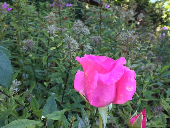 The Inn at Ragged Gardens shows the beauty of Blowing Rock's flowers in late summer.