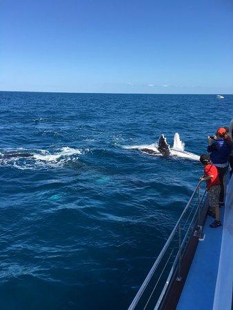 Hervey Bay, Austrália: Freedom Whale Watch