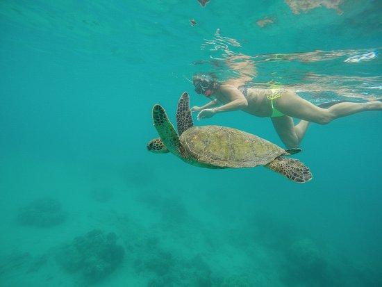 Hawaii Ocean Rafting : Yvonne cruising with a beautiful green sea turtle