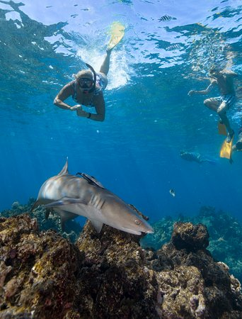 Kuata Island, Fiji: Shark Snorkeling