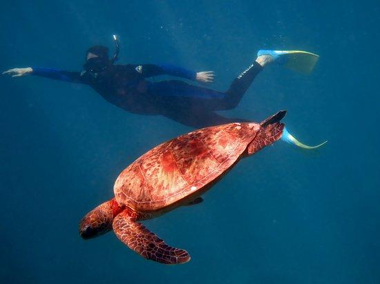 Coral Bay, Australia: Turtle Dive