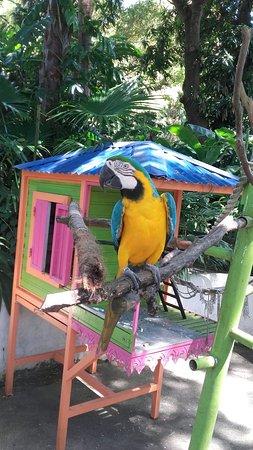 Deshaies, Guadeloupe: 20160823_141640_large.jpg
