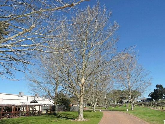 Swan, Australien: DSCN1510_large.jpg