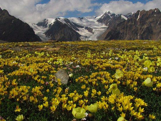 Kuray, รัสเซีย: вид с высоты около 3000 на ледник Большой Актру. Горные маки
