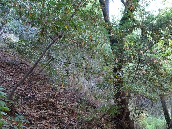 Almaden Quicksilver County Park: Long single path trail in shade with a little water still in the creek below