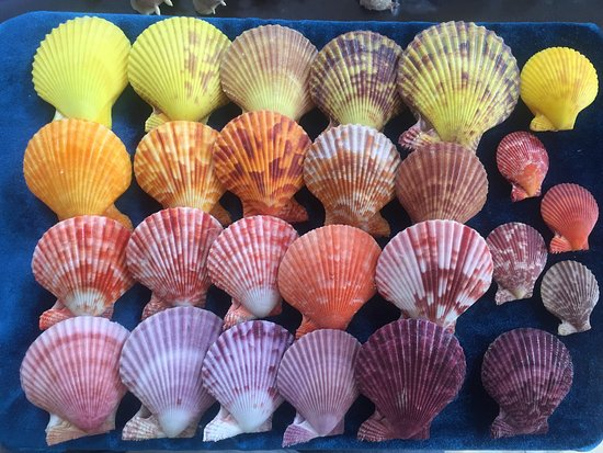 Sea Shell Collection by Argonauta Boracay