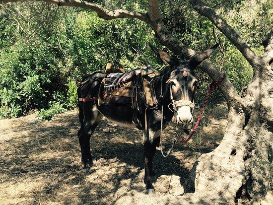 Alianthos Horse Riding : photo0.jpg
