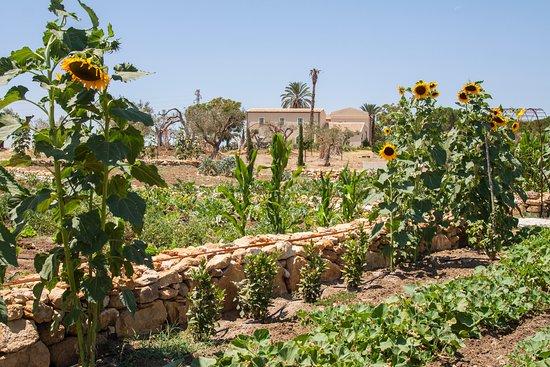 Fontes Episcopi: Garden