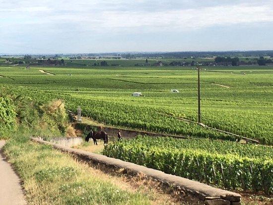 Aux Quatre Saisons Wine Tours : Premier cru vineyard