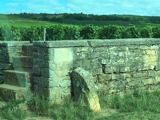 Aux Quatre Saisons Wine Tours : Romanee conti...!