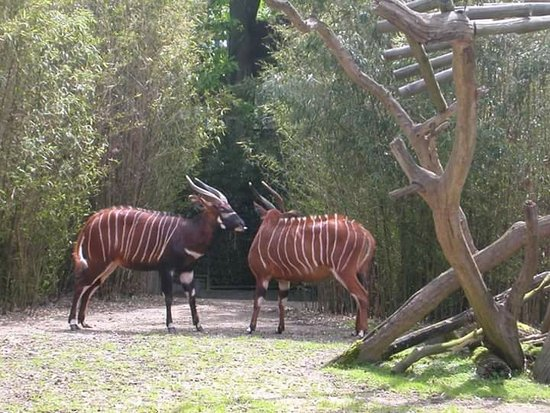 Antwerp Zoo (Dierentuin): FB_IMG_1472026847777_large.jpg