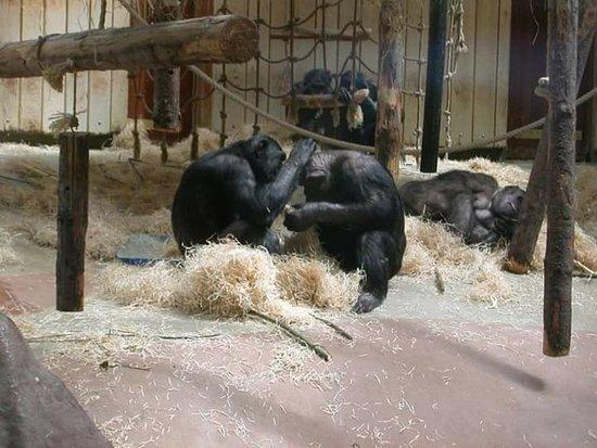 Antwerp Zoo (Dierentuin): FB_IMG_1472026835352_large.jpg