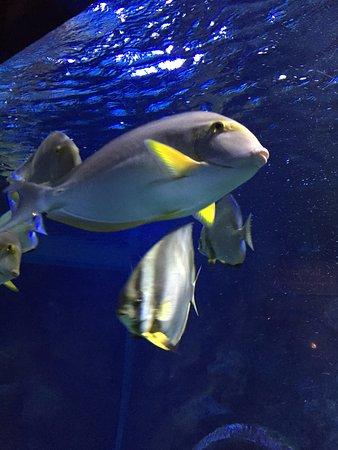 Saint-Gilles-Les-Bains, Reunion Island: Aquarium de St-Gilles.