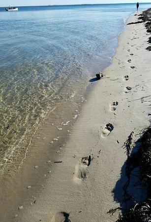 Chatham, MA: Monomoy beach walk
