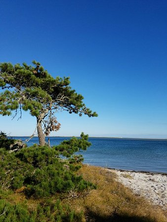 Chatham, MA: Monomoy beach walk