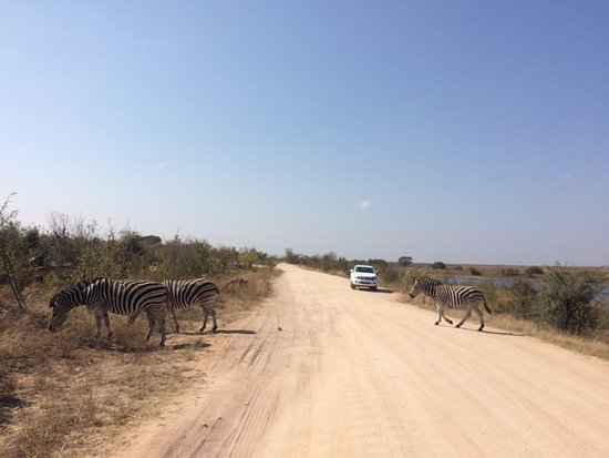 Nelspruit, Afrika Selatan: zebra crossing
