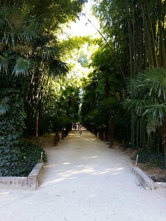 Generargues, Francia: alée palmiers