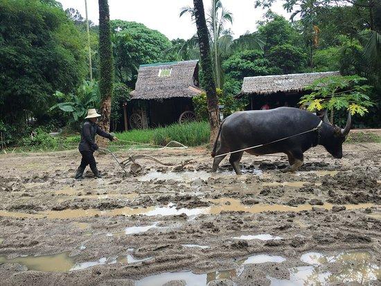 Chalong, Tailândia: photo8.jpg