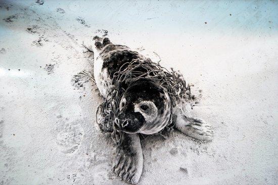 Pieterburen, Ολλανδία: foca 3