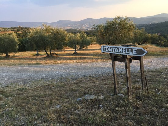 Tavernelle, Italia: Olive trees on the estate