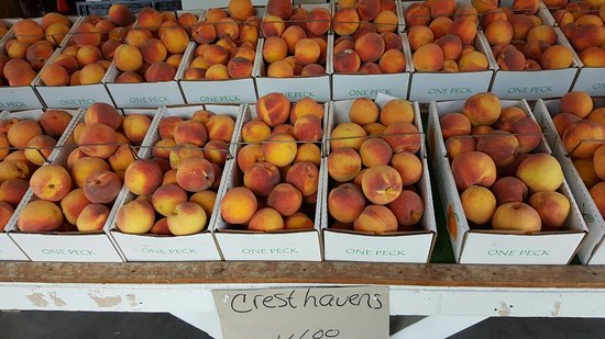 Cobden, IL: Fresh peaches just picked !