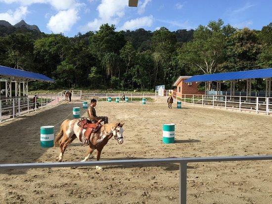 Island Horses