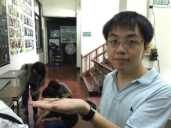 Ảnh về UPLB Museum of Natural History