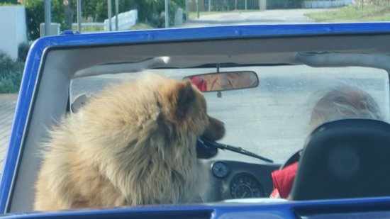 Sedgefield, Zuid-Afrika: Told you! All shapes and size dogs visit the Wild Oats Market and Scarab Village!