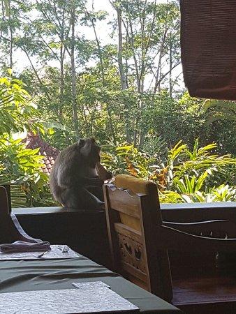 Garden View Cottage: 20160822_034350_large.jpg