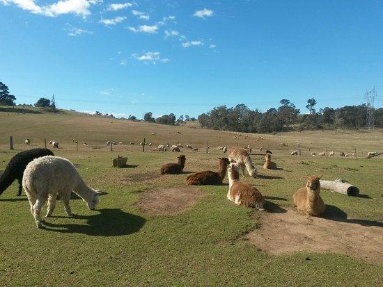 Picton, أستراليا: 20160810_102837_large.jpg
