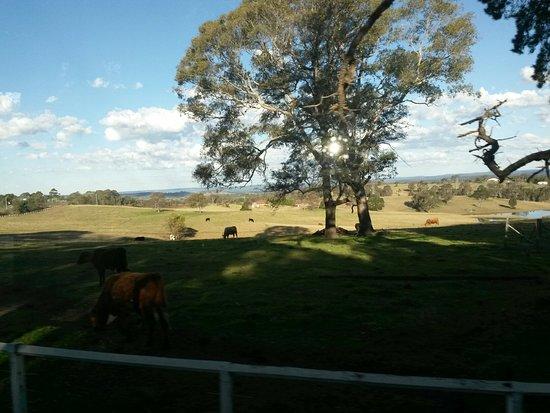 Picton, أستراليا: 20160810_155421_large.jpg