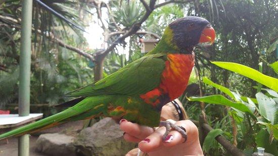 Deshaies, Γουαδελούπη: 20160727_095712_large.jpg