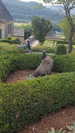 Vezac, Francia: Les paons du jardin