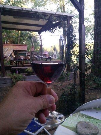 """Lorenzana, Italia: Premier apéro en terrasse sous les pins parasol (bouteille de """"bienvenue"""" offerte)"""