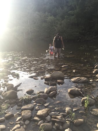 Parthenon, AR: Kids of all ages love to look for minnows in the spring fed creek.