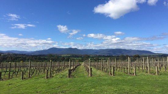 Coldstream, Australien: Domaine Chandon Winery
