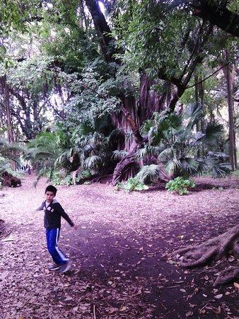 Alger, Argelia: experiments garden1