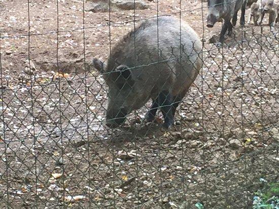 Charleville-Mezieres, Francja: Parc animalier