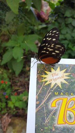 The Original Mackinac Island Butterfly House & Insect World : 20160823_165848_large.jpg