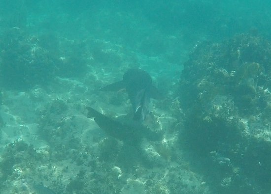 Oyster Pond, St. Maarten: The shark swimming away