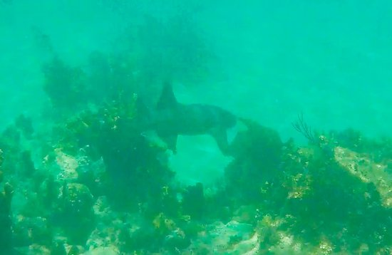 Oyster Pond, St. Maarten: Another view of the shark